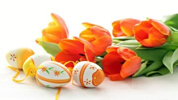 eggs-and-red-tulips-wallpapers_33084_1366x768